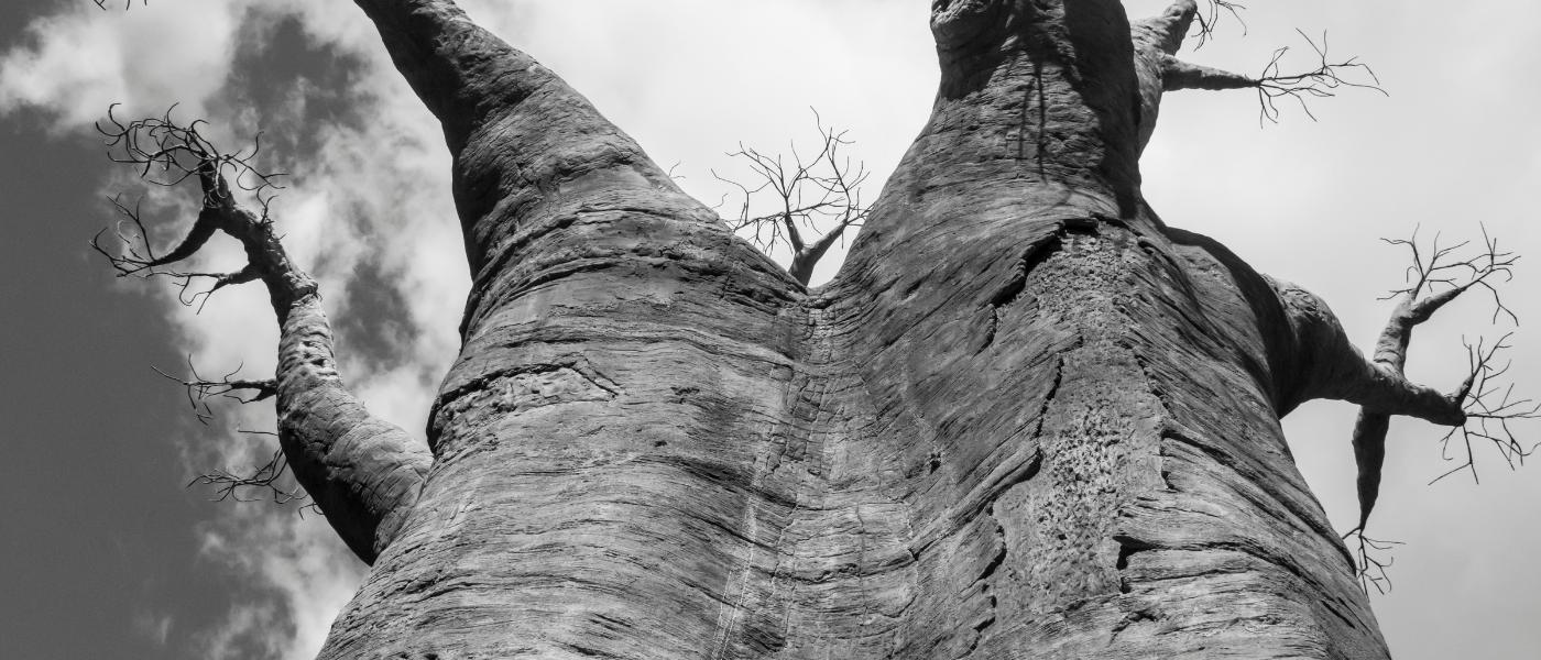 Webinaire Ubuntu : Sous le Baobab de Léontine